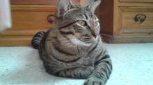 Китайские клички для кошек