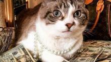 Денежные клички для кошек и котов