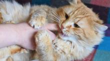 Ласковые клички для кошек и котов