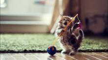 Прикольные клички для котов мальчиков