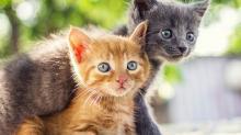 Русские клички для кошек девочек