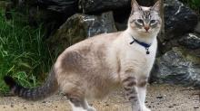 Турецкие клички для кошек и котов