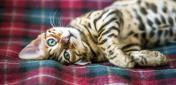 Итальянские и испанские клички для кошек