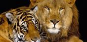 Красивые имена для тигров и львов
