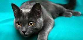 Магические и мистические клички для кошек