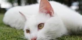 Клички для белых кошек и котов