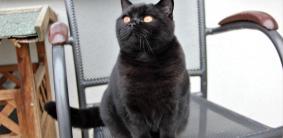 Клички для черных кошек и котов