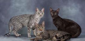 Египетские клички для кошек и котов