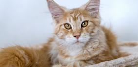 Греческие клички для кошек и котов
