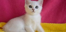 Корейские клички для котов и кошек