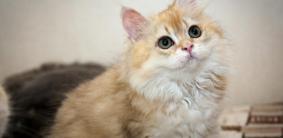 Короткие имена для котов и кошек