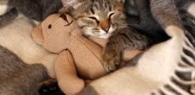 Русские клички для котов мальчиков