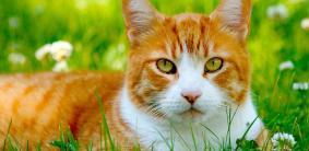Имена для рыжих котов