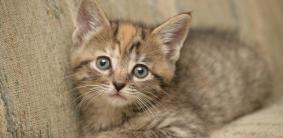 Немецкие клички для кошек и котов