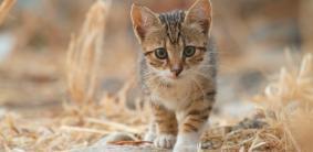 Клички для полосатых котов и кошек