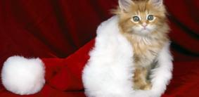 Прикольные клички для кошек девочек