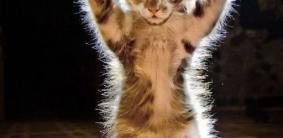 Редкие и необычные клички для кошек