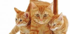Имена для рыжих кошек