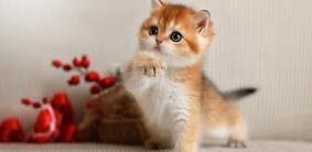 Имена для трехцветных котов и кошек