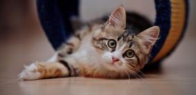 Японские клички для котов и кошек